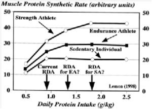 optimal-protein-intake